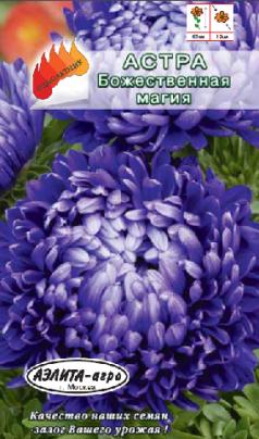 Астра Божественная магия фиолетовая