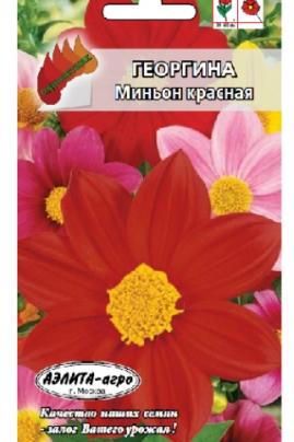 Георгина Миньон красная - многолетнее травянистое растение