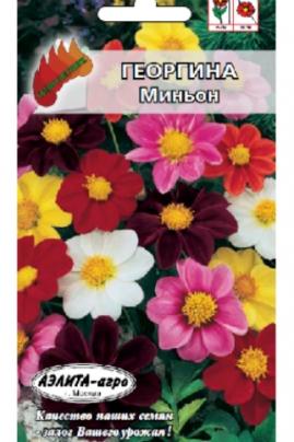 Георгина Миньон смесь - компактное невысокое травянистое растение
