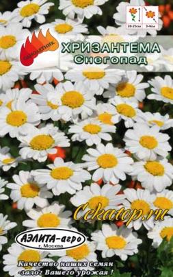 Хризантема болотная Снегопад