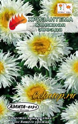 Хризантема максимум Снежная звезда