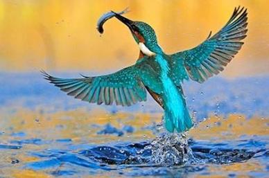 Птица зимородок король рыбаков