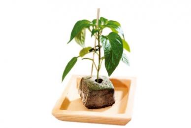 Практичный кокосовый брикет Jiffy Growblock 90*90 мм