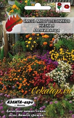 Смесь цветов Ленивица низкая