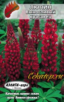 Семена люпина Выносливый красавец красный
