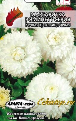 """Семена цветов Маргаритка сорт """"Вечная красавица белая"""""""