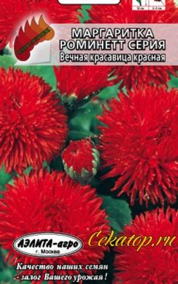 """Семена цветов - Маргаритка сорта """"Вечная красавица красная"""""""