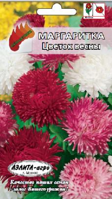 Маргаритка монстроза Цветок весны