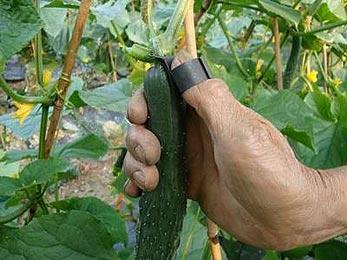 Приспособление для сбора овощей