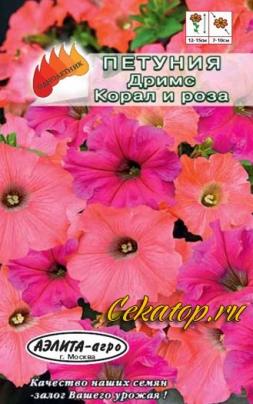 Петуния Дримс Коралл и роза