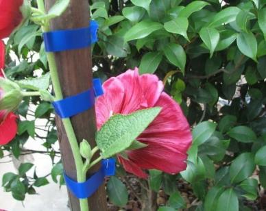 Тапенер (Tapener) - инструмент для подвязки растений