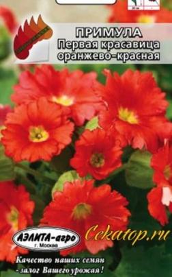 """Семена Примулы """"Первой Красавицы Оранжево-Красной"""""""