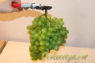 Секатор для сбора винограда