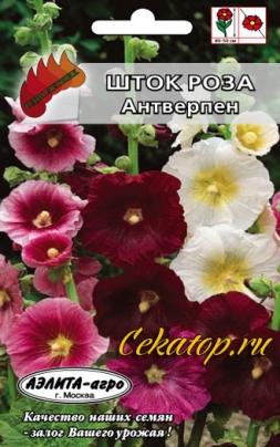 Семена шток-розы Антверпен