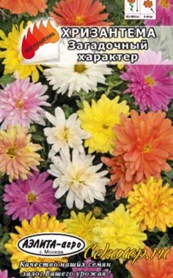 "Семена Хризантемы ""Загадочный характер"""