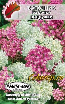 Семена смеси оттенков ваточника Бабочки подружки