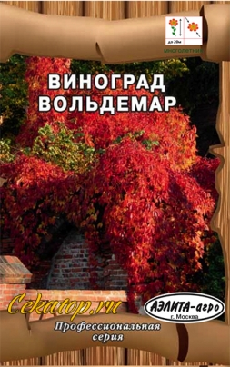 Виноград амурский Вольдемар