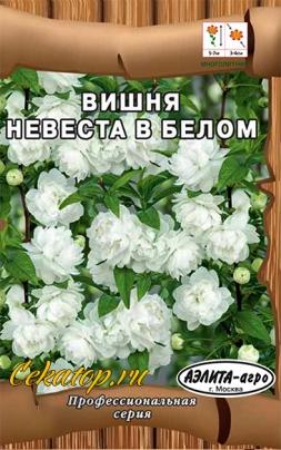 Вишня Невеста в белом