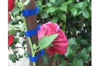 Подвязка цветов к опоре инструментом Tapetool BZ-II
