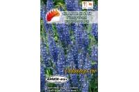 Семена сальвии Голубая Королева