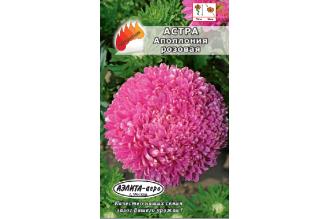 Астра  Аполлония розовая