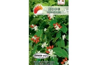 Кофе Арабика – декоративное вечнозеленое растение