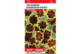 Космидиум Волшебная флейта – однолетнее растение высотой до 30 см