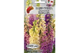 Наперстянка Королева Елизавета - двулетнее декоративное растение высотой до 150