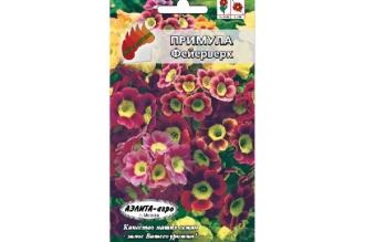 Примула Фейерверк - многолетнее растение высотой 20-30 см