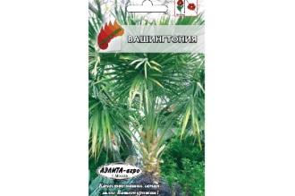 Вашингтония - небольшая пальма с веерообразными листьями