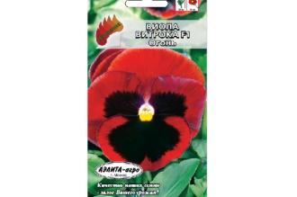 Виола Витрока F1 Огонь – двухлетний сорт с крупными цветками