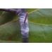 Прививочная фоторазрушаемая лента PE90