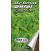 Салат листовой «Здравушка», семена